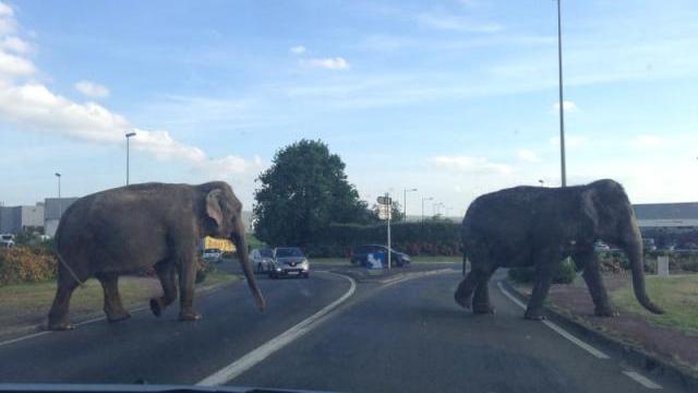 des-elephants-sur-la-route.jpg