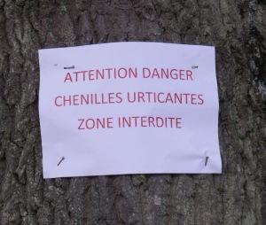 Copie-de-chenilles_bte-verte_2014-06-23_-019