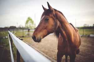 Alimentation-cheval-quel-aliment-pour-quel-cheval